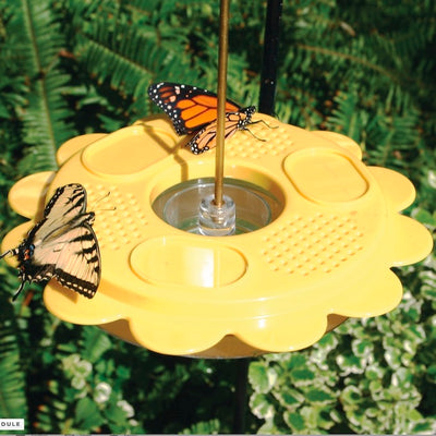 Hanging Butterfly Feeder- Detail