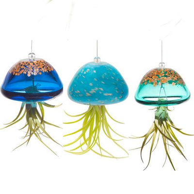 Jellyfish Air Plant Hangers