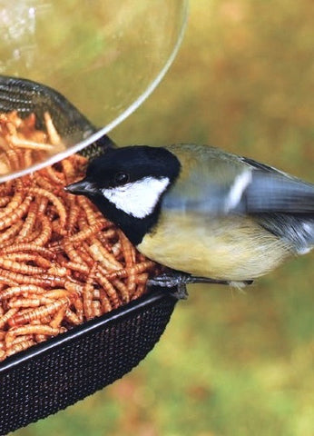 Mesh Tray All-Purpose Bird Feeder