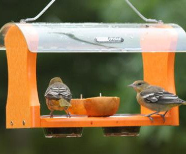Fruit & Jelly Oriole Feeder by BirdsChoice-Recycled