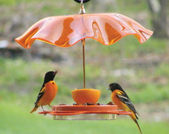 Oriole Feeder with Optional Weather Guard