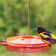 Fruit & Jelly Oriole Feeder with Nectar Concentrate