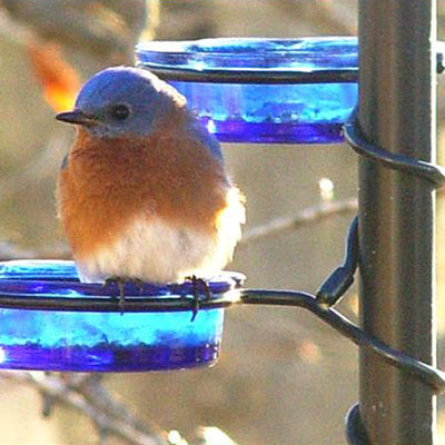 Quick-Connect Glass Bluebird Feeder