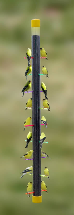Rainbow Finch Bird Feeder