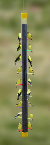 Rainbow Finch Feeder