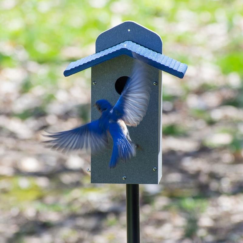 Recycled Bluebird House