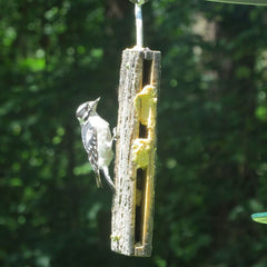 Spreadable Suet in the Suet Sandwich Bird Feeder