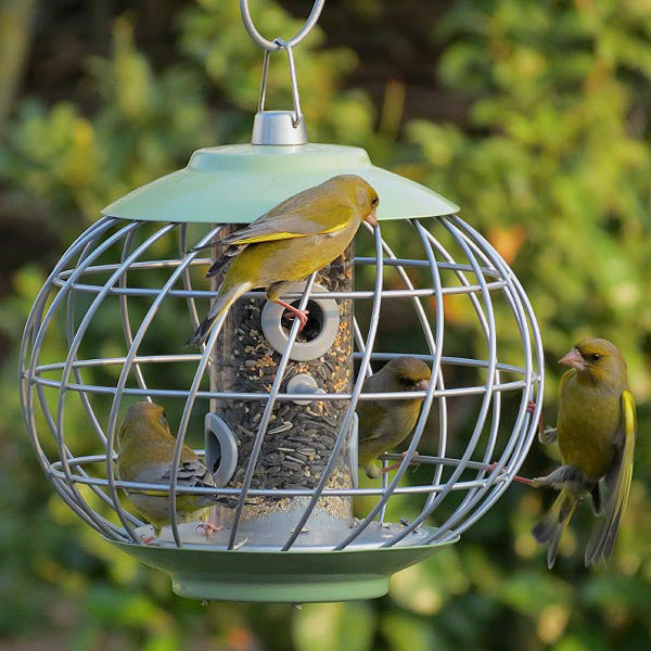 Nuttery Squirrel Proof Seed Feeder Caged Bird Feeders