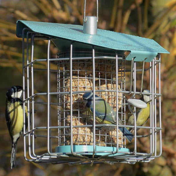 Nuttery caged suet feeder squirrel proof suet feeders for How to make suet balls for bird feeders