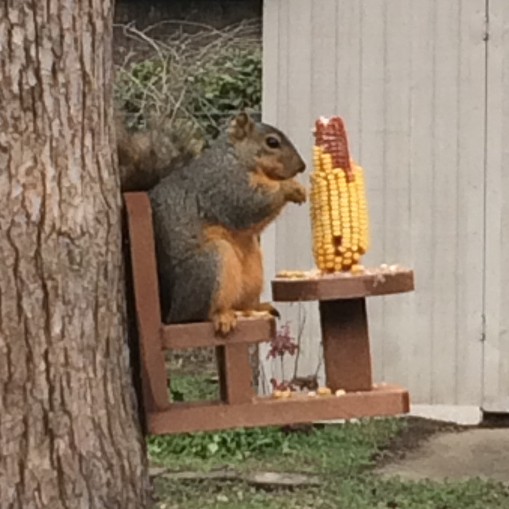 Table And Chair Squirrel Feeder For Corn Cobs The