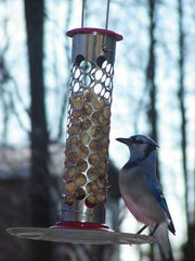 Stainless Steel Whole Peanut Feeder