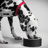 Magisso Dog Bowl Black