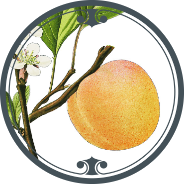 APRICOT SEED VIRGIN OIL