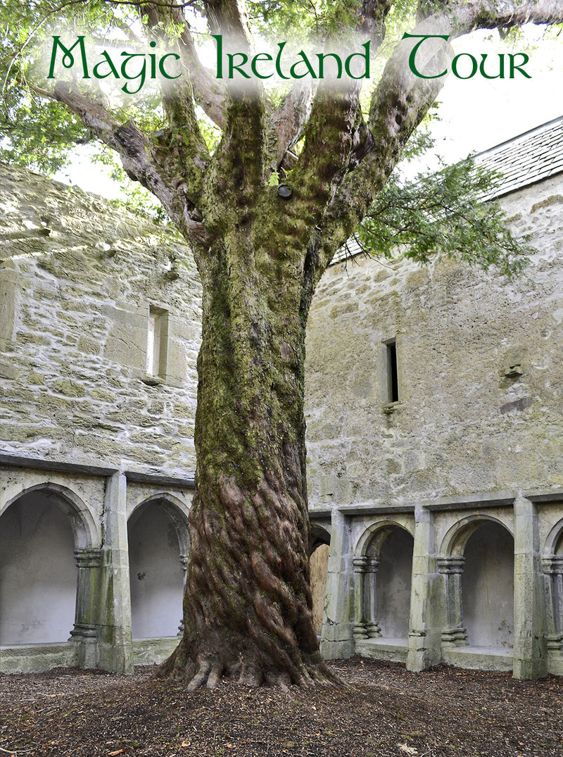 Muckross Abbey, Killarney, Kerry, Magic Ireland Tour, Irish vacation, sacred yew tree, ancient myths, legends