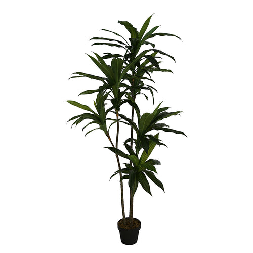 New Potted Faux Dracaena Lemon Lime Artificial Succulent Green Home Realistic