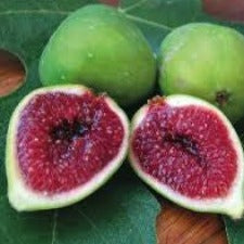 Fig White Adriatic - JULY DELIVERY