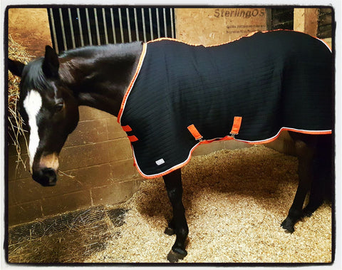 Horse Rugs Customer Photo Gallery