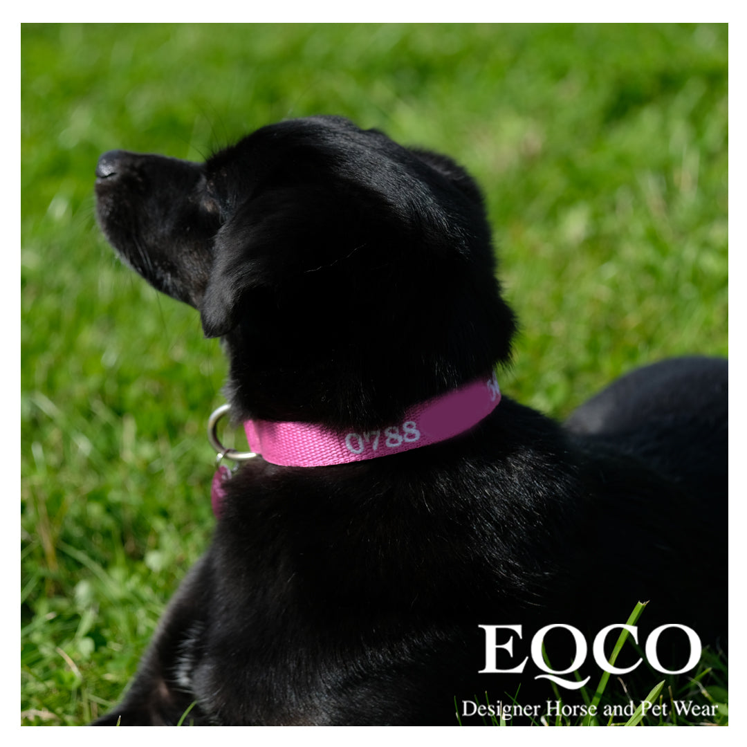 Eqco Embroidered Dog Collar