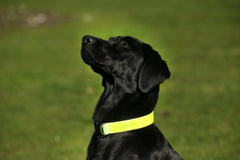 Hi-viz Reflective Neon Yellow Dog Collar