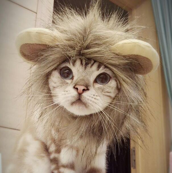 I Feel Like a Lion Today Cat Costume - One Cool Gift - 1 & I Feel Like a Lion Today Cat Costume | One Cool Gift