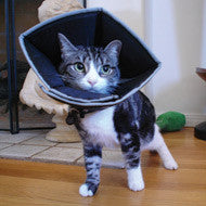 "Cat Comfy Cone on a cat size 4.5"" neck"