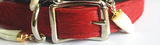 American Cowhide plain dog collar Red/gold capped gator teeth