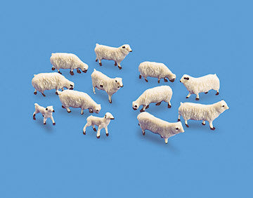 Sheep & Lambs - 00