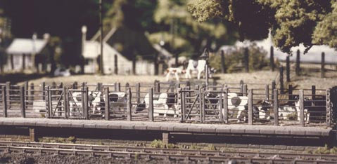 Cattle Dock