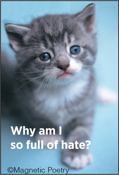 "Why Am I So Full Of Hate Cat Magnet | 2"" x 3"""