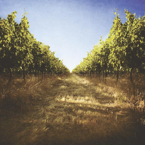 shot from our margaret river winery