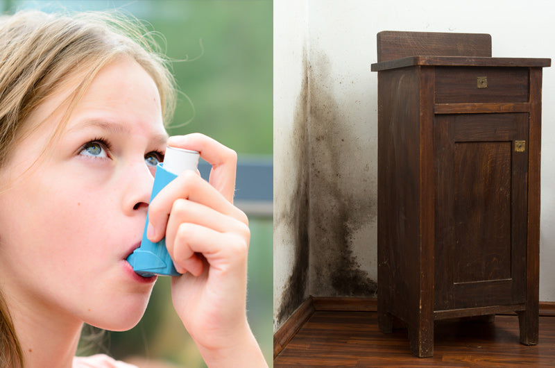 Understanding the Link Between Mould and Asthma