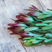 Protea Leucadendron Spray - Burgundy/Green