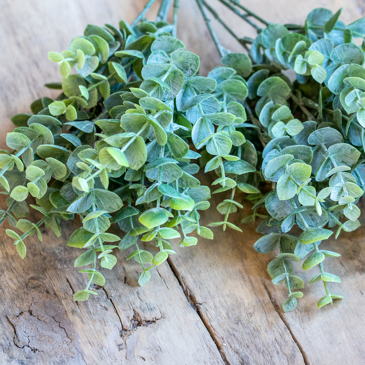 Eucalyptus Bush - Grey Green