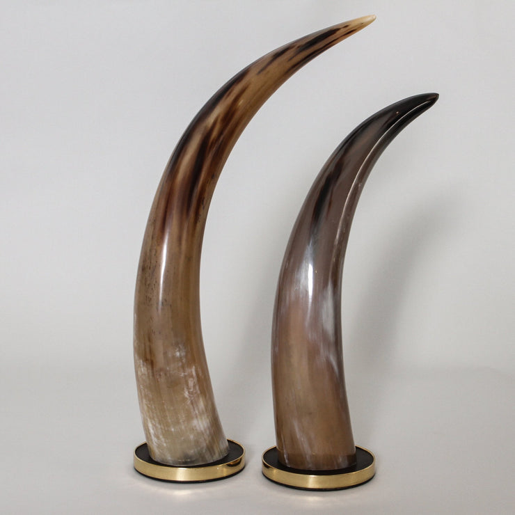Horn on Timber Base
