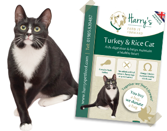 Turkey & Rice (Cat)