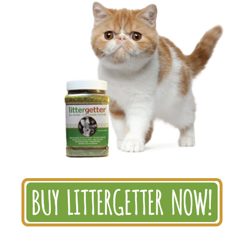 How to litter box train your cat | Litter training a kitten