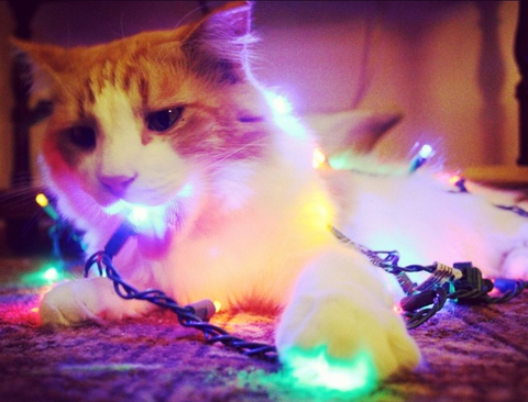 cat|kitten|gray|Christmas|lights