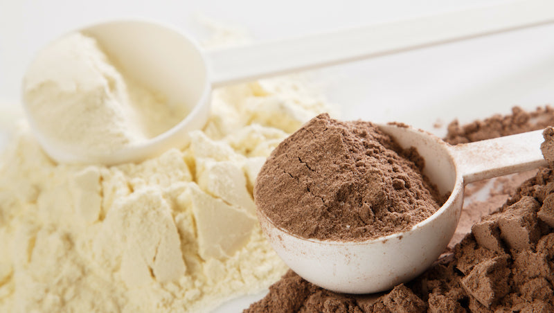 A scoop of chocolate whey protein next to a scoop of unflavored whey protein