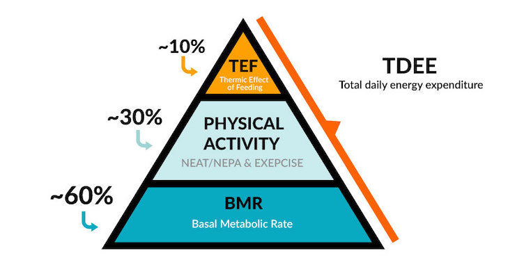 Graph showing the calorie expenditure of TDEE