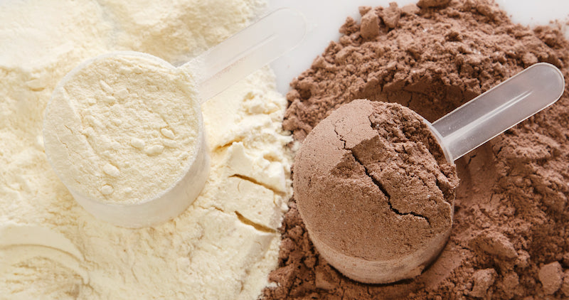 Scoop of chocolate flavored protein powder next to a scoop of unflavored protein powder
