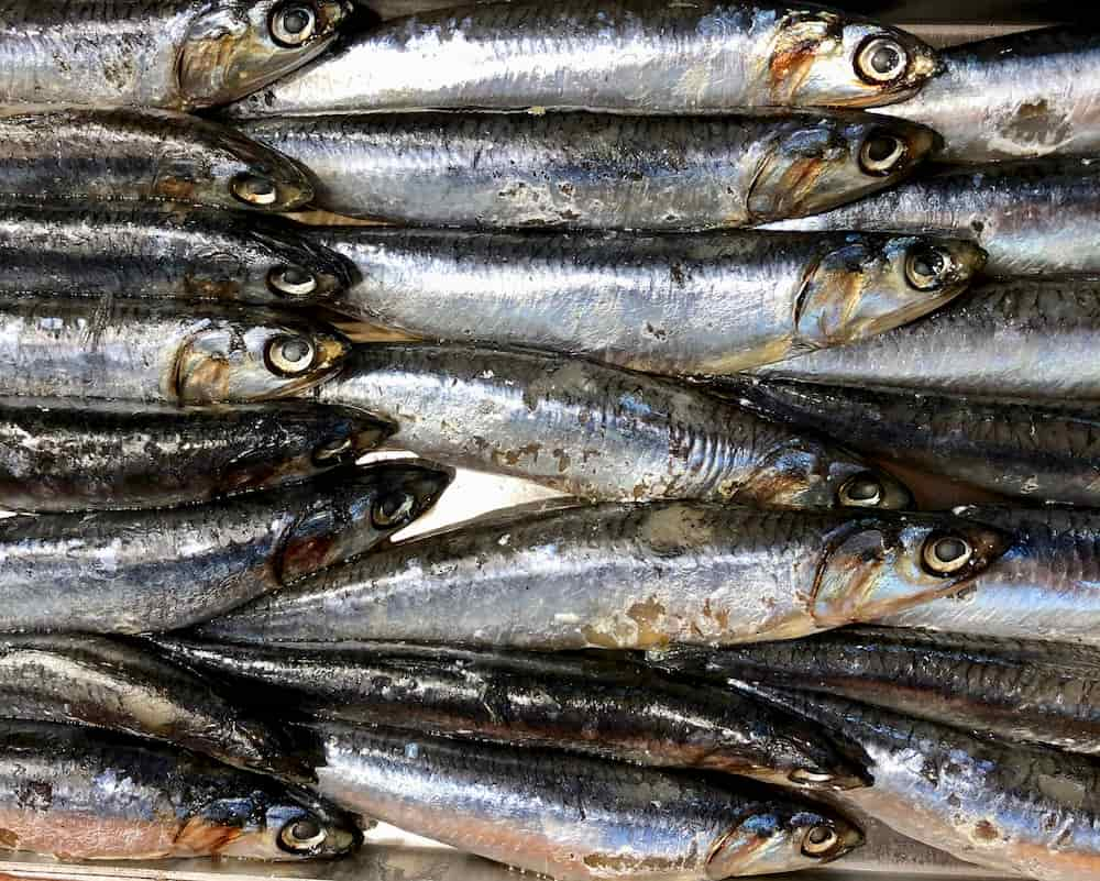 Sardines are superb