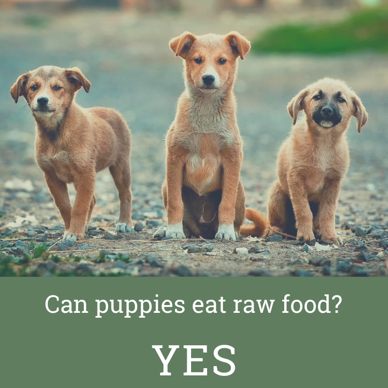 Puppies Need Real Real Food