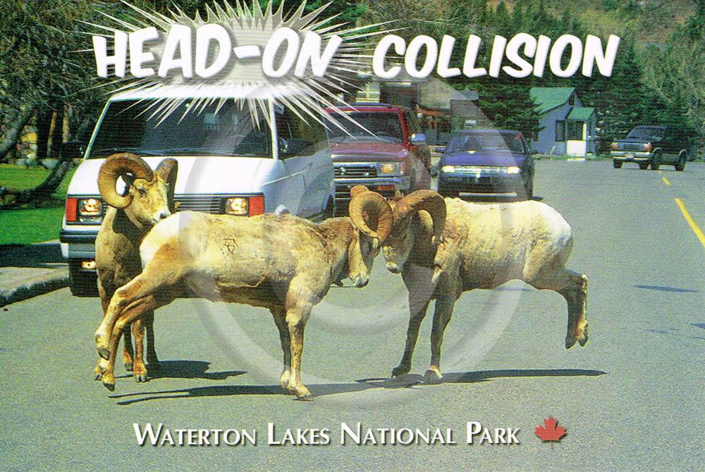 Waterton Head-On 4x6 Card