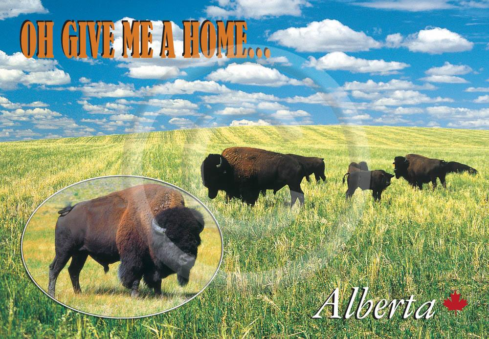 Bison Home  4x6 Card