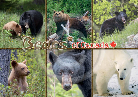 Bears of Canada 5x7 Card