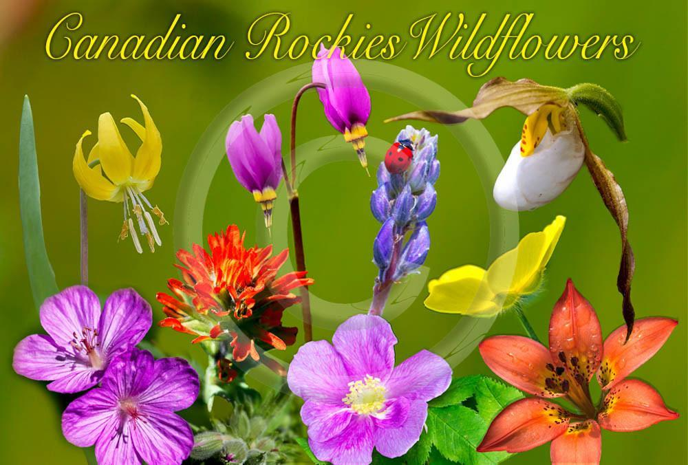 Wildflowers Canadian Rockies Metal Magnet