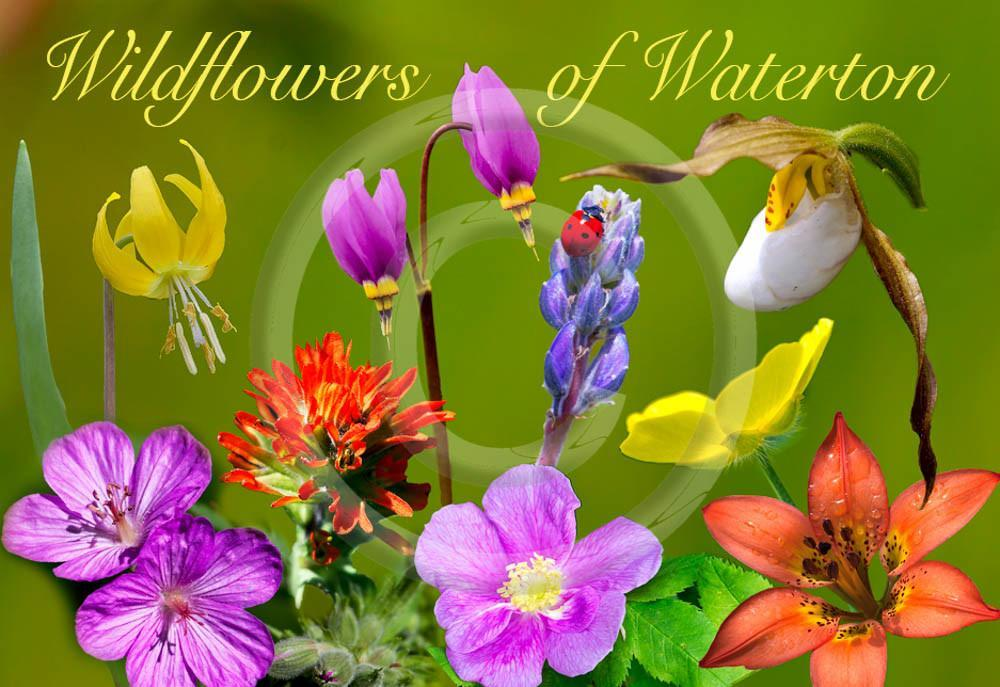 Wildflowers of Waterton Metal Magnet