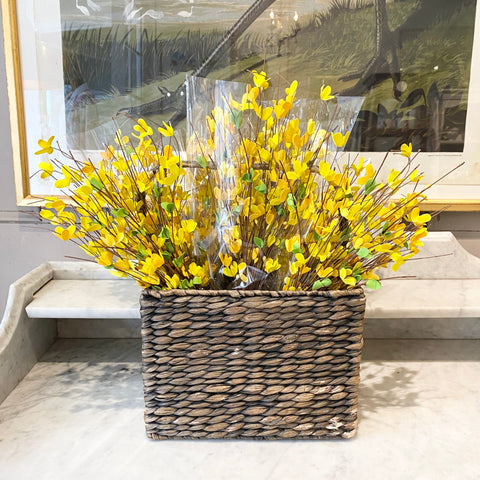 Forsythia Bunch