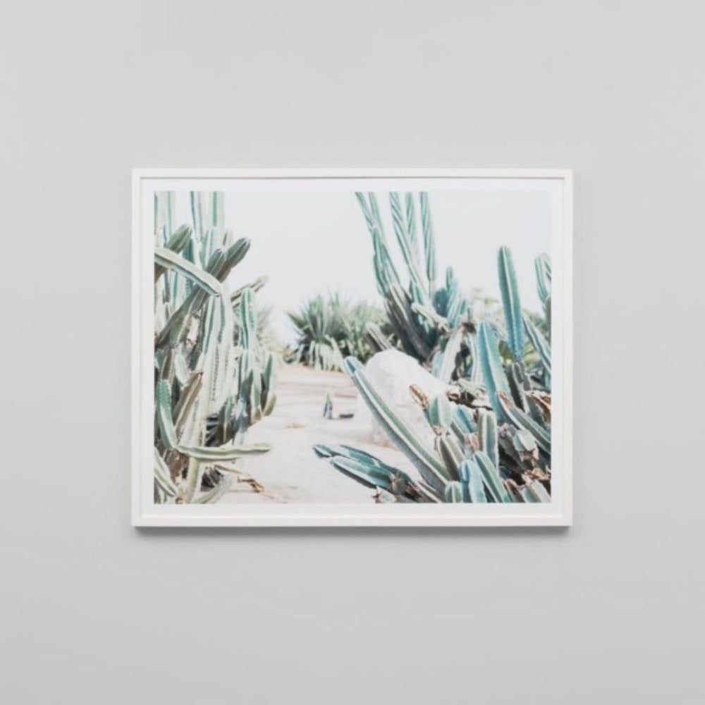 Framed Print - Cactus Path - Oxley and Moss