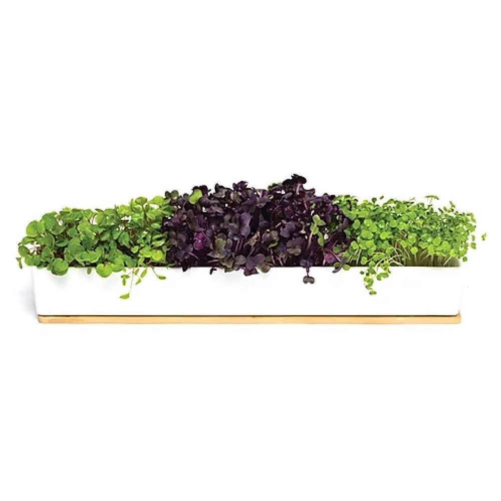 Microgreens Windowsill Box